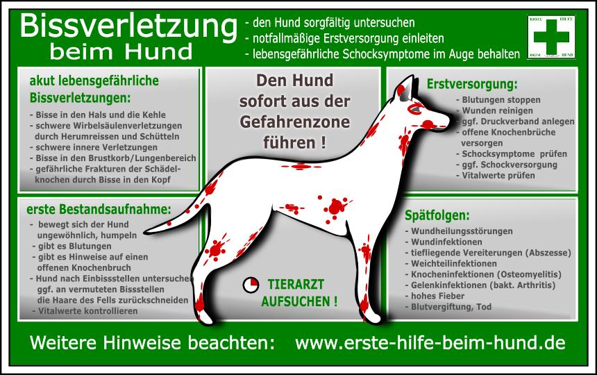Erste Hilfe Beim Hund Starke Blutungen