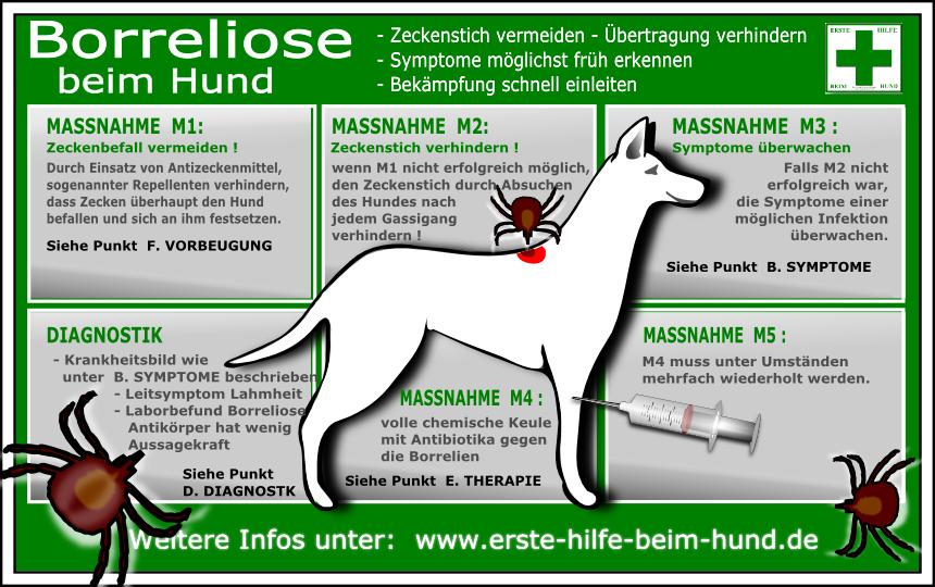 hund gelenkschmerzen arthrose