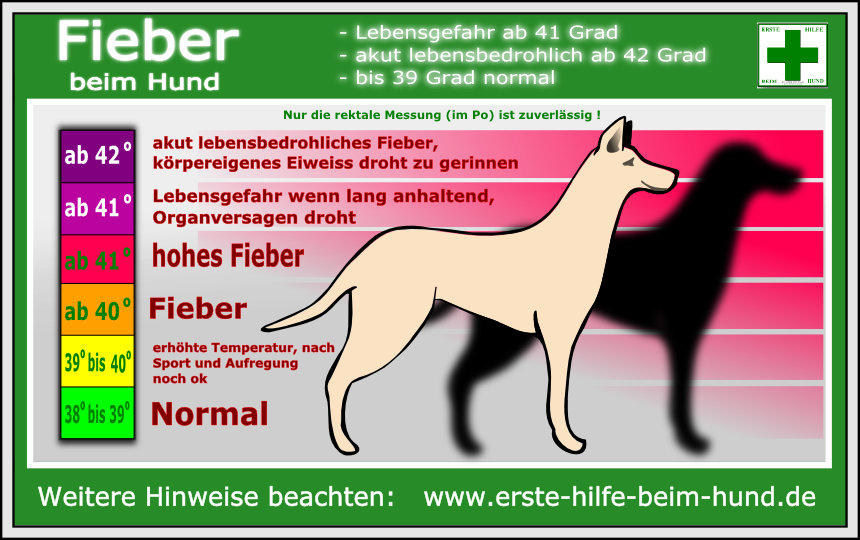 normal temperatur hund
