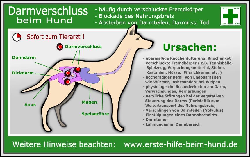 Erste Hilfe Beim Hund Darmverschluss