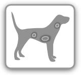 kauknochen hunde test