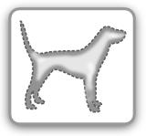 ungiftige heckenpflanzen für hunde