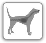 Erste Hilfe Beim Hund Durchfall