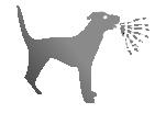 lebensmittel giftig für hunde